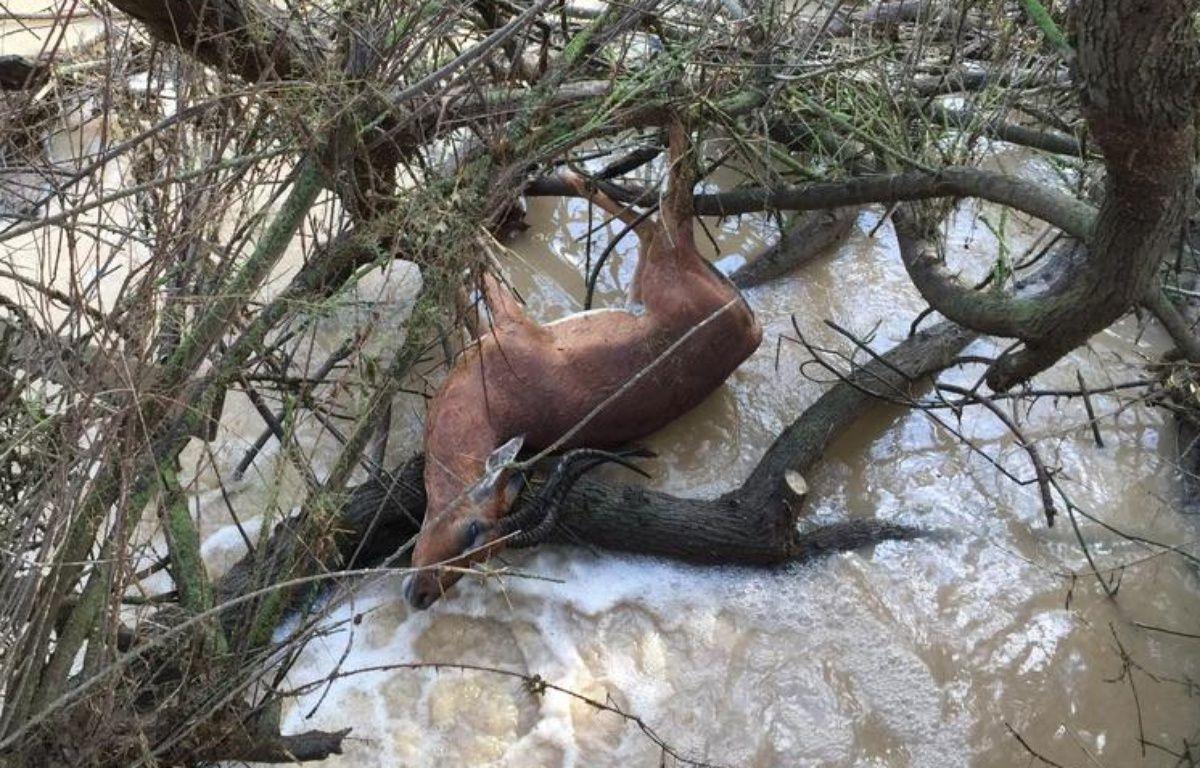 La réserve africaine de Sigean a été inondée pour la 7e fois en 15 ans. – Dimitri Moulins / RTL