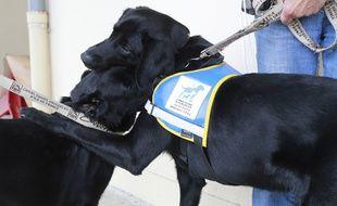 Le chien guide d'aveugle a disparu à Lourdes.