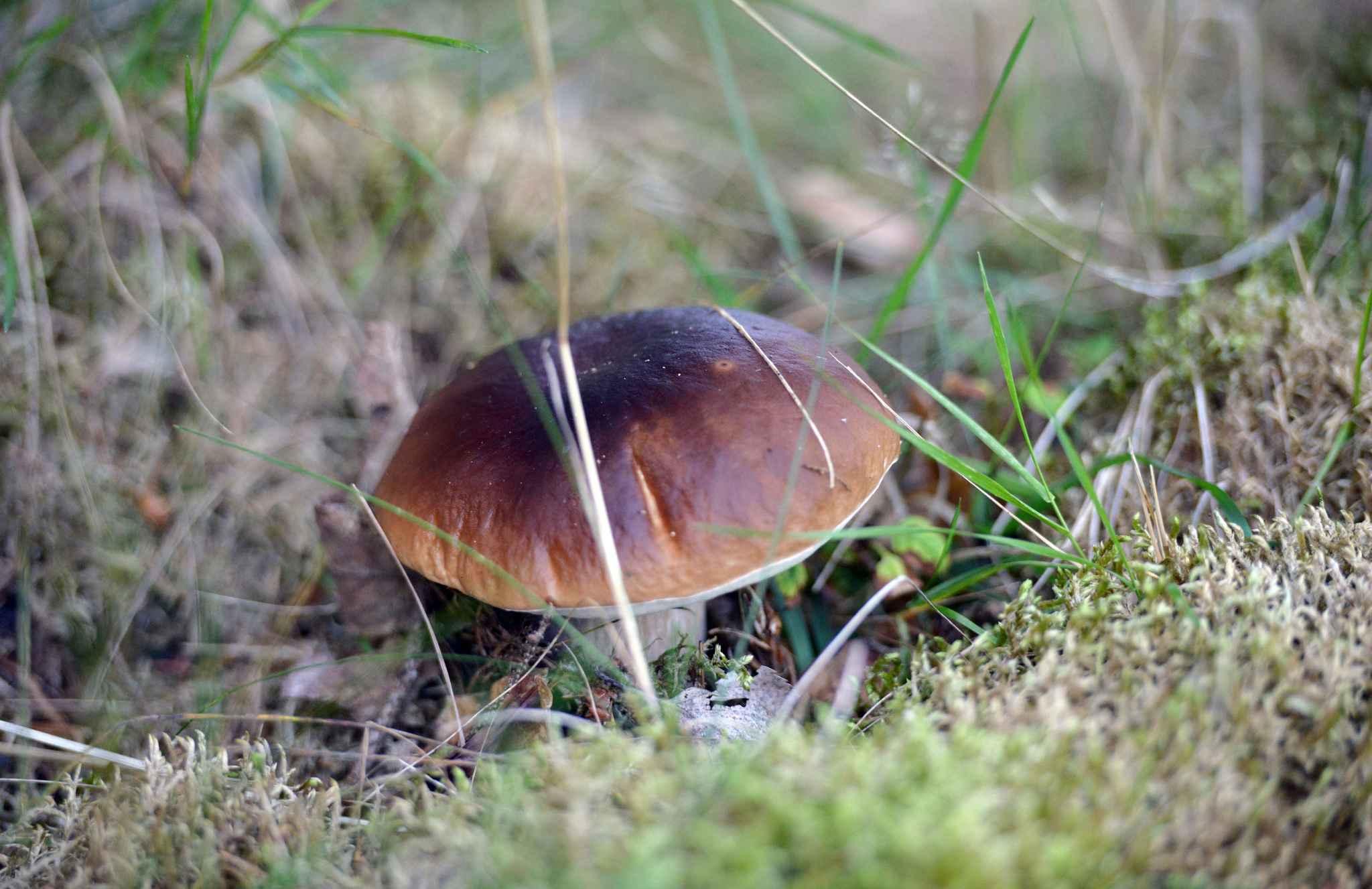 Radioactivité. Du césium 137 dans des champignons de Rhône-Alpes
