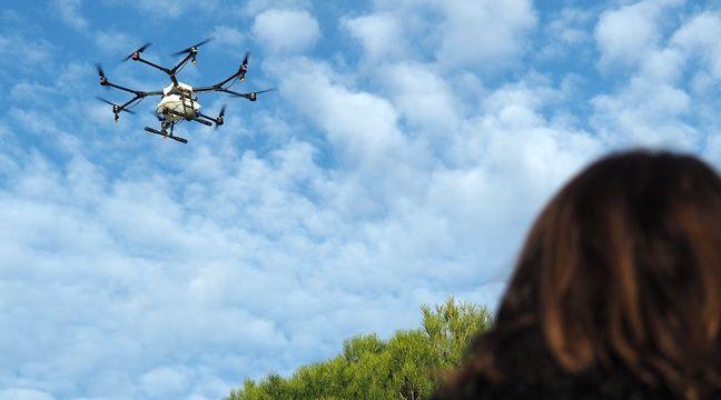 cannes des drones pour lutter contre les chenilles processionnaires. Black Bedroom Furniture Sets. Home Design Ideas