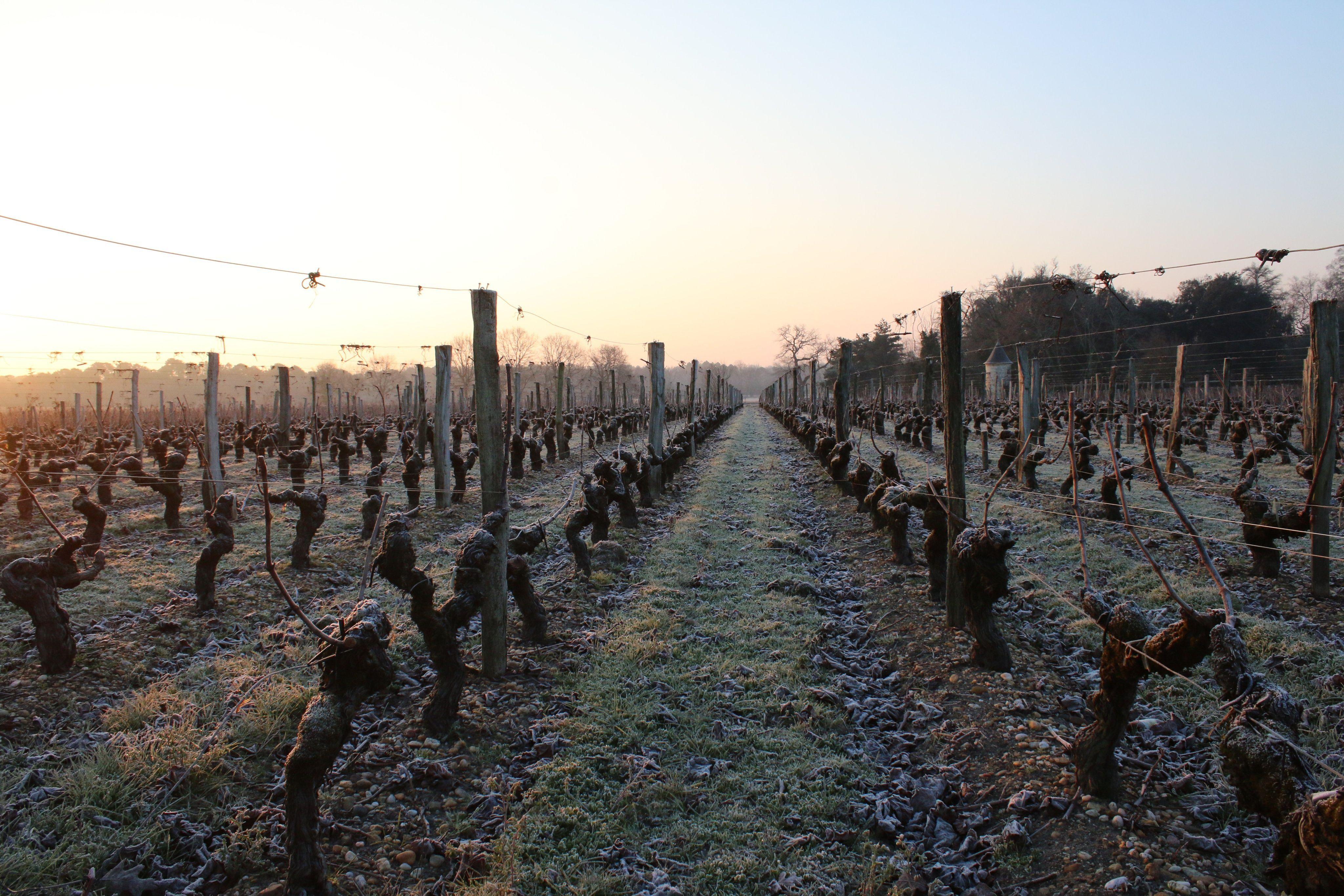 648x415 le 22 janvier 2017 des pieds de vigne geles dans le medoc pres de