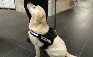 Depuis décembre 2016, la Ratp fait appel à des chiens renifleurs pour les colis suspects.