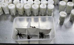 750 mygales ont été découvertes dans un paquet cadeau aux Philippines début avril 2019.