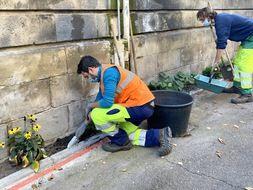 Opération de plantation dans une rue à Bordeaux