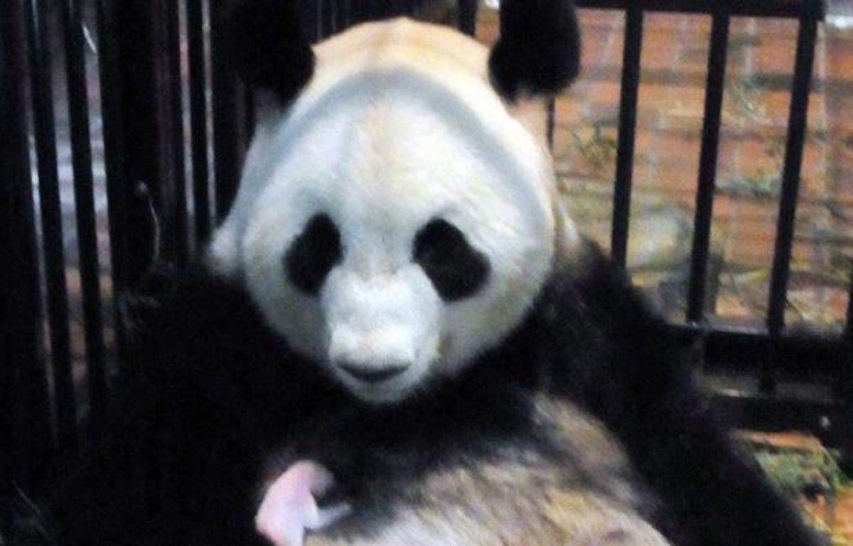 Un bébé panda géant est mort mercredi, a annoncé le zoo de Tokyo où il était né la semaine dernière. Le zoo de Ueno (centre de Tokyo) a expliqué que le petit était décédé d'une pneumonie. – UENO ZOOLOGICAL PARK afp.com