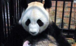Un bébé panda géant est mort mercredi, a annoncé le zoo de Tokyo où il était né la semaine dernière. Le zoo de Ueno (centre de Tokyo) a expliqué que le petit était décédé d'une pneumonie.