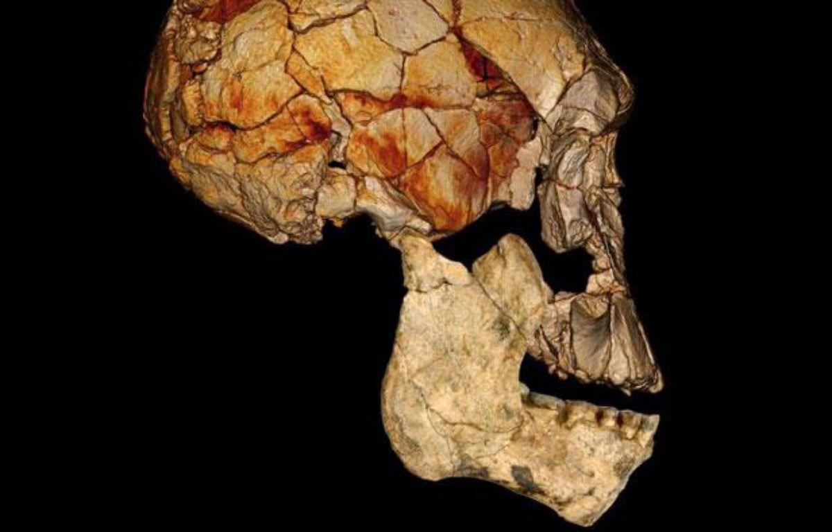 Image fournie par National Geographic et «Nature», montrant une reconstruction informatique du crâne  KNM-ER 1470. – Fred Spoor/AP/SIPA