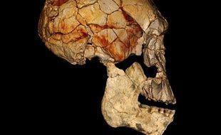Image fournie par National Geographic et «Nature», montrant une reconstruction informatique du crâne  KNM-ER 1470.