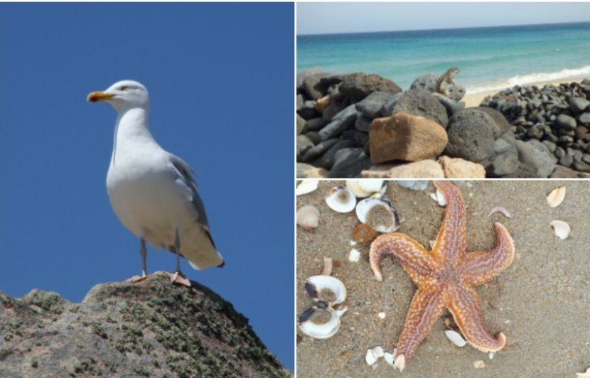 Mouettes, écureuil, étoile de mer… Vos plus belles photos d'animaux croisés à la plage