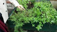 Des plantes répulsives anti-moustiques dans la crèche toulousaine de Croix de Pierre.