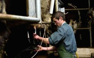 Une ferme laitière bio en Normandie.