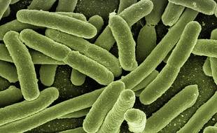 La bactérie « Klebsiella pneumoniae » se propage dans les hôpitaux européens (illustration).