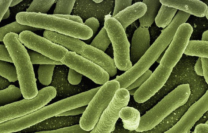 Japon : Deux bactéries résistantes aux antibiotiques seraient responsables de 8.000 morts en un an