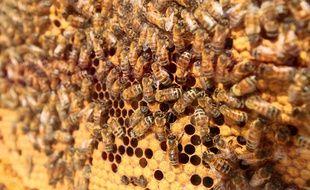 Illustration ruche d'abeilles