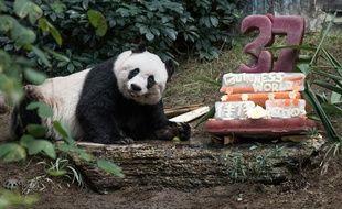 Jia Jia, la doyenne des pandas en captivité, fête ses 37 ans dans son enclos d'Ocean Park, un parc d'attraction de Hong Kong, le 28 juillet 2015.