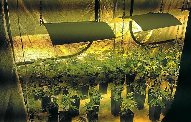 Beautiful Plante Cannabis Interieur Ideas - Trend Ideas 2018 ...
