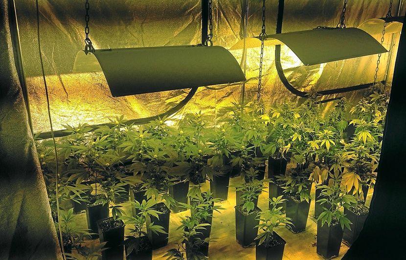 Nantes: Une mini-ferme à cannabis découverte dans un grenier