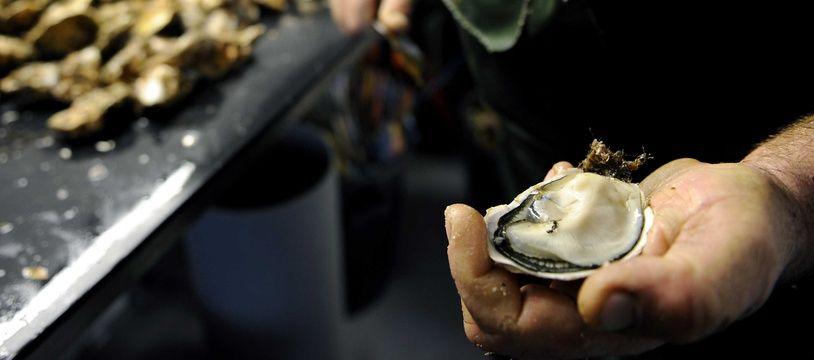 Des huîtres du bassin de Thau (illustration).