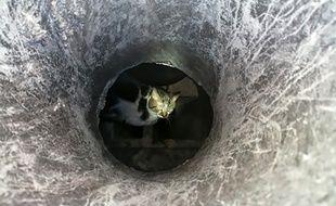 Le chat coincé dans une cheminée.