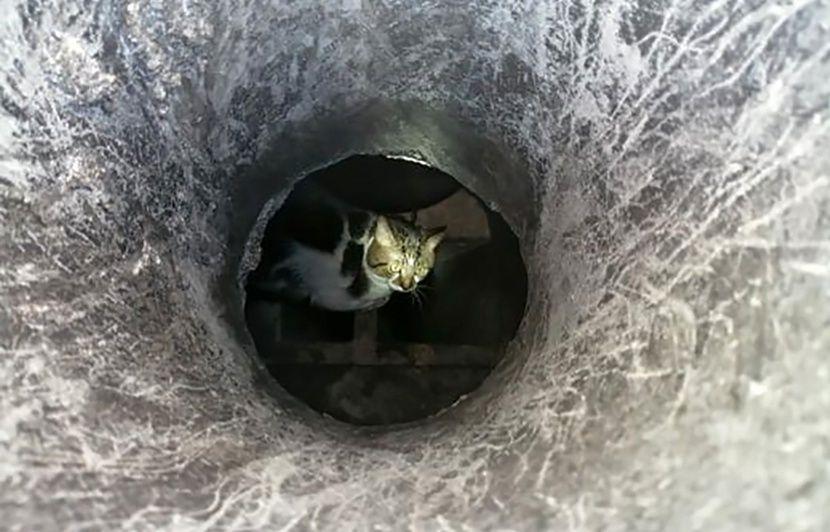Oise: Un chat libéré par les pompiers après être resté coincé 15 jours dans une cheminée