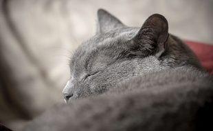 Cette image mignonne de chat n'a qu'un seul but : vous attendrir.