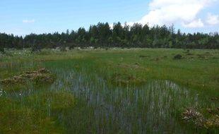 Les chercheurs ont étudié l'assimilation du carbone dans la tourbière de Frasne dans le Jura.