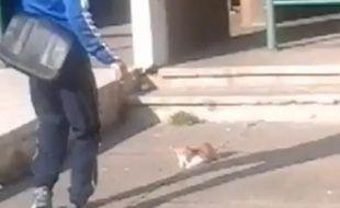 Capture d'écran YouTube d'un homme jetant un chat en l'air à Marseille.