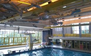 Les poissons de la piscine Léo-Lagrange devraient demeurer sur place.