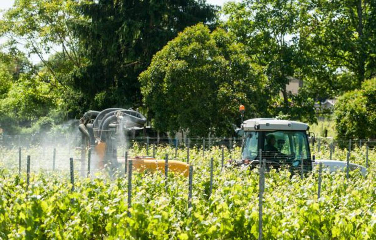 Application de pesticides dans des vignes bordelaises – S.ORTOLA/20MINUTES