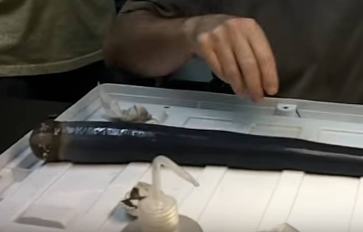 Un mollusque étrange semblable à un énorme ver noir et gluant, qui survit dans la vase au fond de la mer grâce à des bactéries, a été étudié vivant par des scientifiques pour la première fois. – Capture d'écran / YouTube