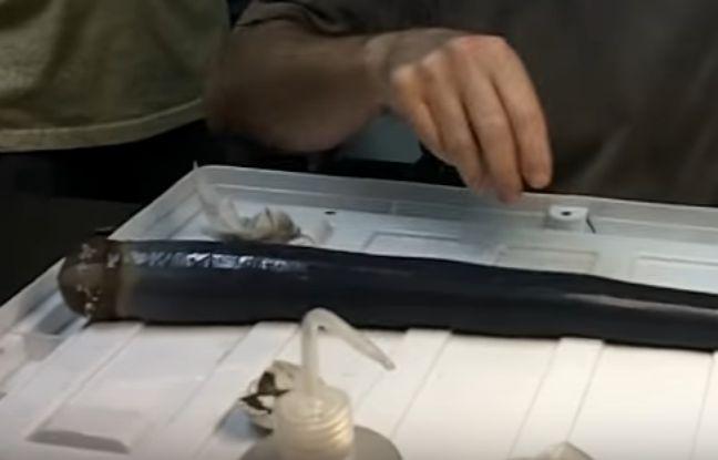 Un mollusque étrange semblable à un énorme ver noir et gluant, qui survit dans la vase au fond de la mer grâce à des bactéries, a été étudié vivant par des scientifiques pour la première fois.
