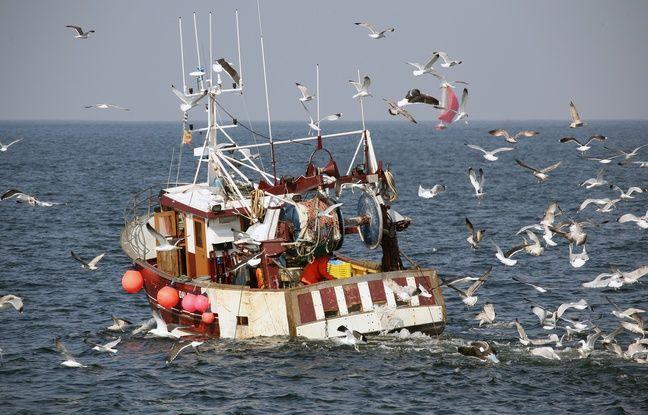 648x415 illustration bateau pecheurs ligneurs large quiberon bretagne