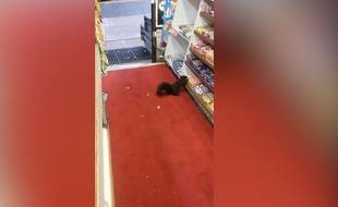 Le voleur de barres chocolatées était un écureuil - Le Rewind (video)