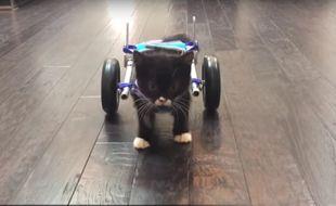 Le chaton Cassidy peut de nouveau se déplacer grâces à des roulettes créées par une imprimante 3D.