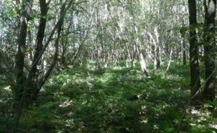 Quel avenir pour la forêt de Chambaran?