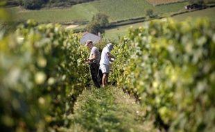 En dépit de la crise, les transactions de domaines viticoles français se multiplient: les surfaces cédées ont doublé en vingt ans et le prix moyen par hectare a été multiplié par trois, selon une étude publiée mardi par le réseau Vinéa, spécialiste sur ce marché.