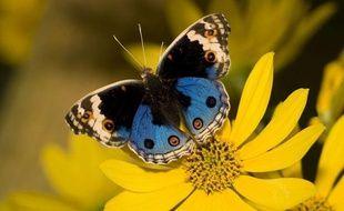 Un papillon pollinise une fleur.