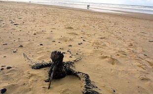 Illustration d'un oiseau mazouté. Ici sur la plage du Grand Crohot près de Lège-Cap-Ferret, le 04 janvier 2003.