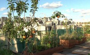 Tomates, pommes, fraises: sur le toit de l'école AgroParisTech, des passionnés ont créé un immense potager qui sert de laboratoire pour trouver la meilleure façon de cultiver en ville.