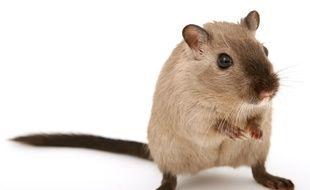 Une patiente de l'hôpital Tenon, situé dans le 20earrondissement de Paris, a filmé le 15avrildes souris en train de courir dans sa chambre.