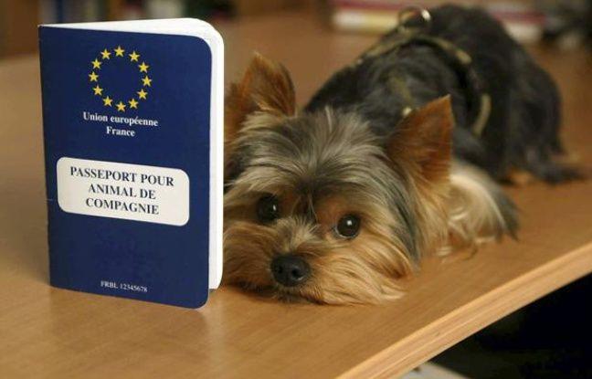 vacances pensez au passeport pour votre chien. Black Bedroom Furniture Sets. Home Design Ideas
