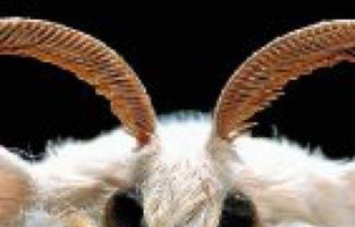 Le papillon dit bombyx du mûrier. –  P. BLANCHOT / HEMIS.FR