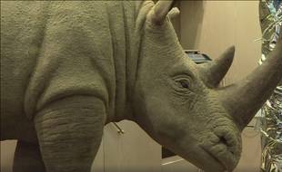 Un rhinocéros géant a été fabriqué par un pâtissier de Thoiry (Illustration).