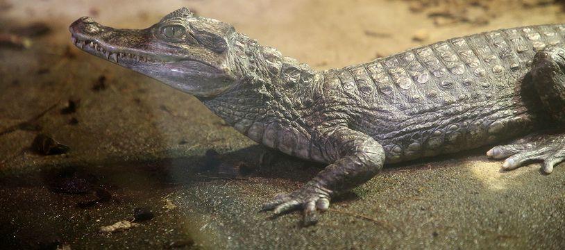 Certains particuliers abandonnent même des crocodiles.