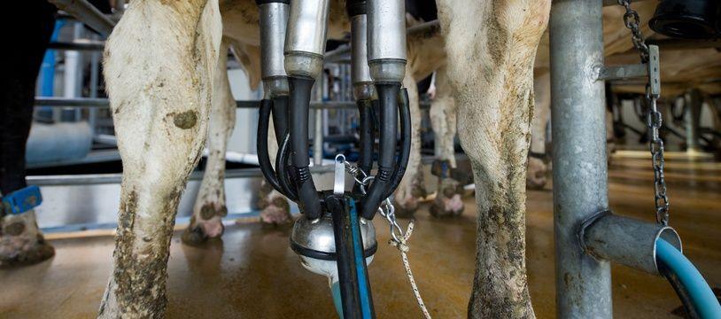 Jouy-en-Josas le 20 mai 2011. Ferme du Viltain. Elevage de bovins vaches laitières. (illustration)