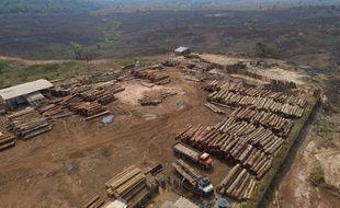 Déforestation au Brésil (illustration).