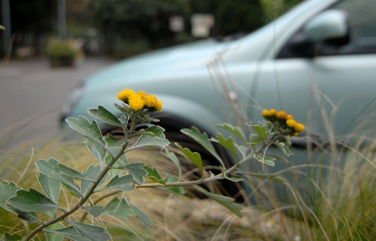Illustration. Fleur dans la ville. Le 09 01 07 – G . VARELA / 20 MINUTES