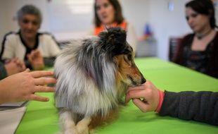 Gandhi, le petit chien shetland, lors d'une séance de médiation animale à la maison d'arrêt de Nantes.