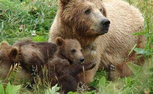 L'ourse Cannelle et ses petits en 2001
