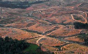 Vue aérienne, prise le 24 février 2014, montrant la déforestation sur l'île de Bornéo.